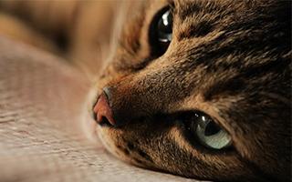"""《爱猫之城》:满满治愈系的""""猫生"""""""