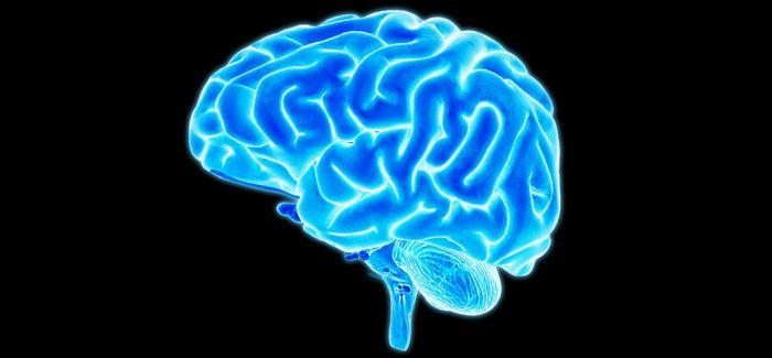 """印度人脑博物馆 和大脑来次""""亲密接触"""""""