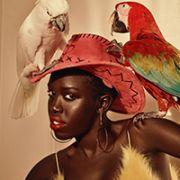 鹦鹉与时尚