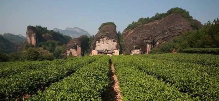 进入岩茶的感官世界