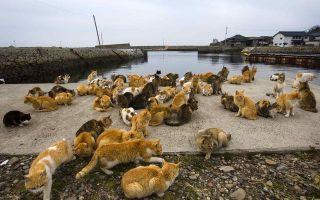 日本猫岛的由来
