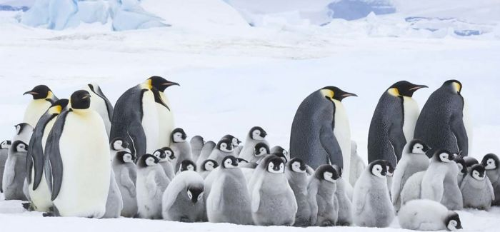 《帝企鹅日记2》:尊重生命 敬畏自然