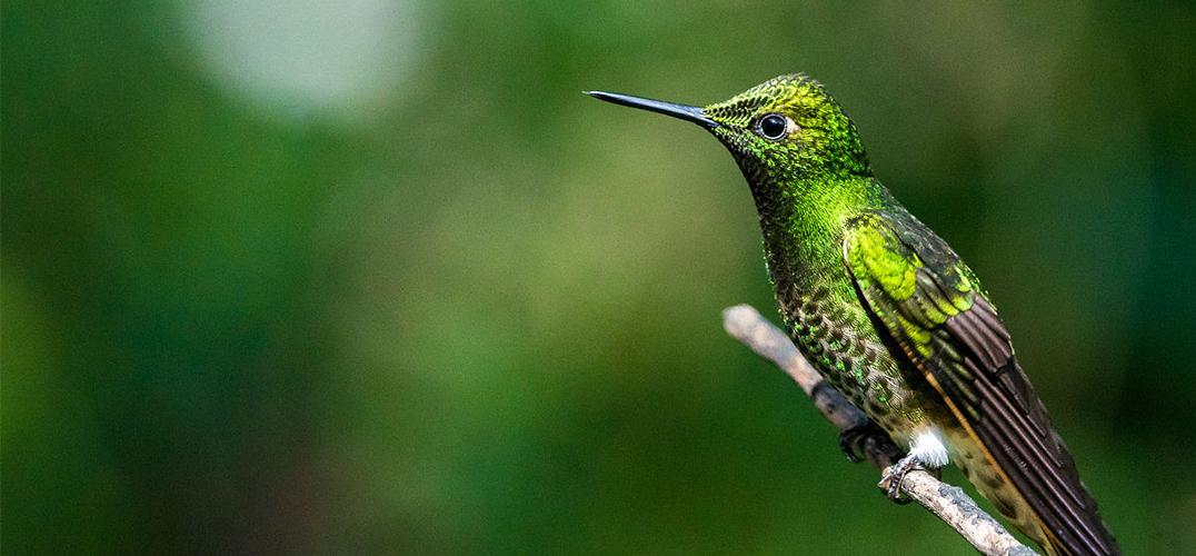 赴哥伦比亚寻鸟