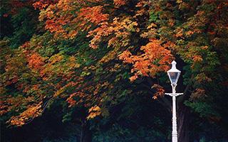 像王尔德那样 在都柏林散个秋天的步