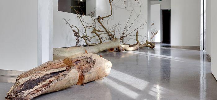 2019威尼斯双年展 德国代表艺术家名单敲定