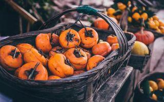 初冬食柿 去火除燥