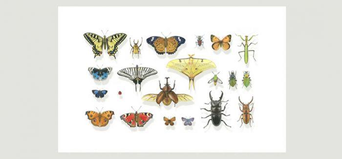 植物科学画家曾孝濂作品在浙江自然博物院展出