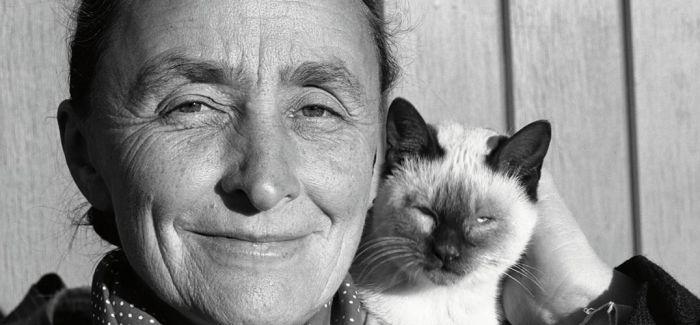 艺术家和宠物猫的独特联系