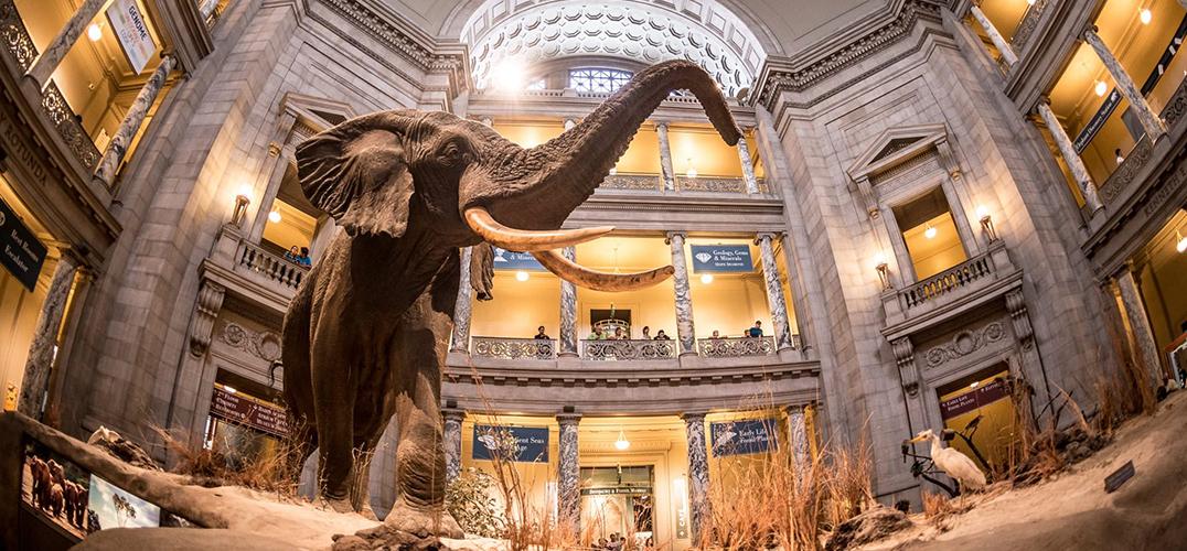 经费欠缺 美国多家博物馆停业
