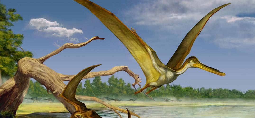 化石背后的故事