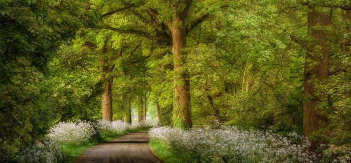 哈苏摄影师眼中的树林