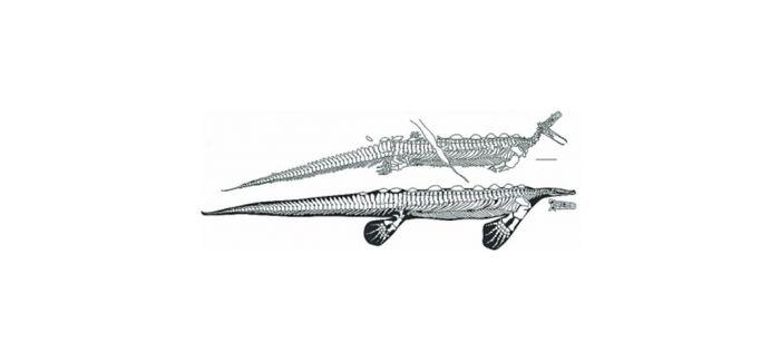 2.48亿年前类鸭嘴兽化石首次被发现