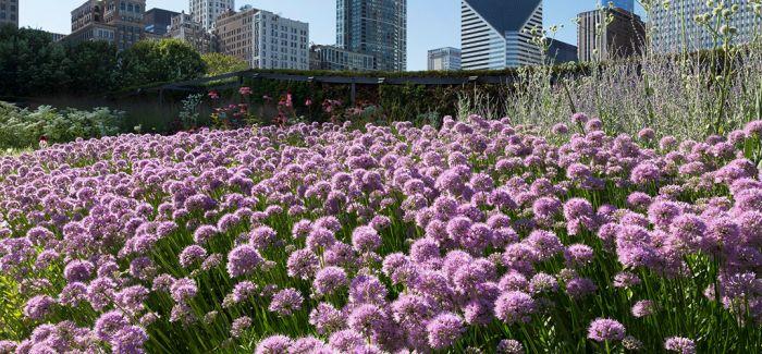 """芝加哥""""绿色屋顶"""" 诠释新型人文生态"""