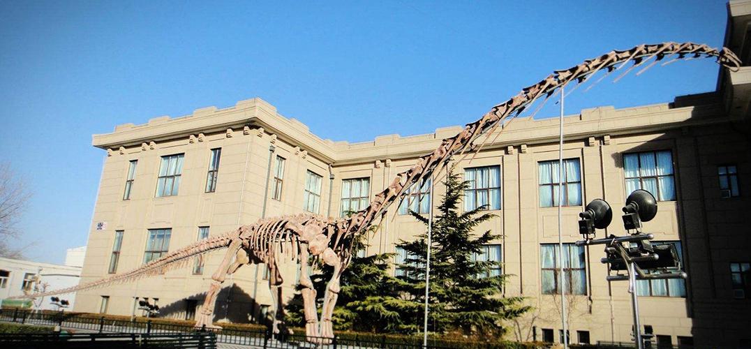 北京海关首次移交76件罚没古生物化石