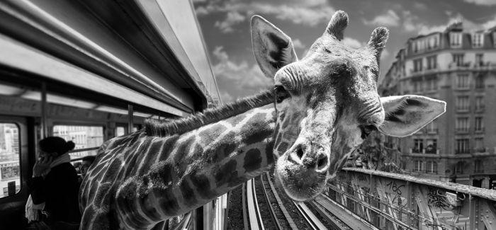 """野生动物的""""另类生活"""""""