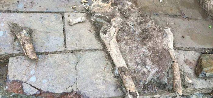 湖北郧西县发现墓葬群 年代可追溯到新莽时期