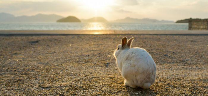 """日本""""兔子岛""""之行:卡哇伊背后的忧伤"""