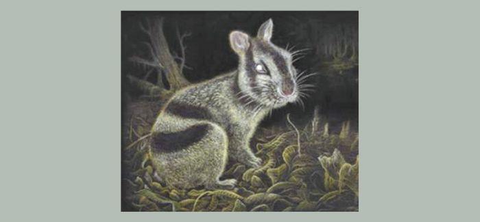 云南昭通发现600万年前的苏门答腊兔化石