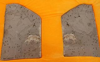 我国发现迄今最早具有完整舌骨的原始哺乳动物化石