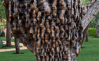 用木头诠释生命的斗争