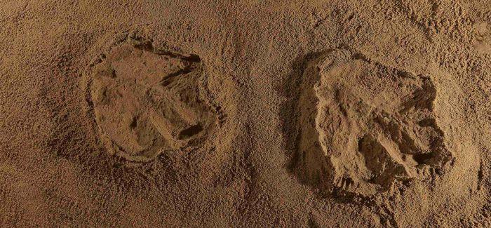 古生物学家发现亚洲首例霸王龙足迹