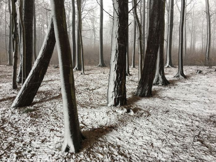 55-1st-TREES-Christian_Helwig.jpg