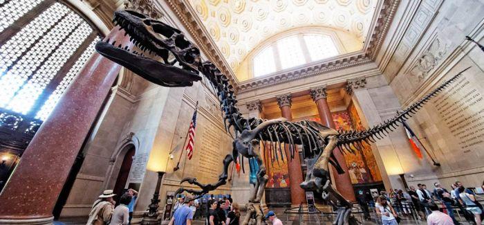"""在美国自然历史博物馆中""""睡一觉"""""""