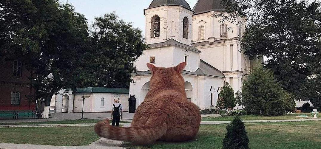 欢迎光临巨猫世界