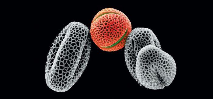 显微镜下的神奇世界