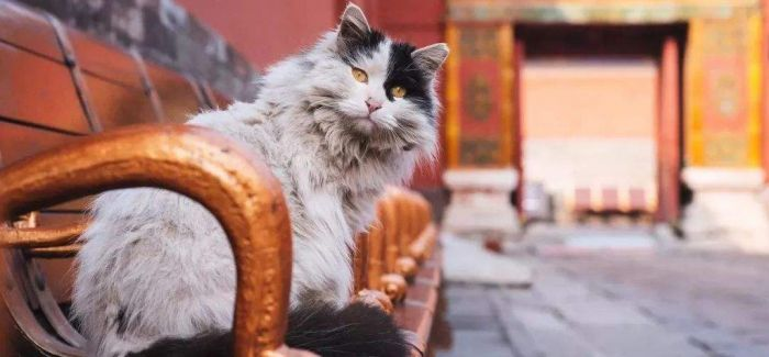 由来已久的故宫猫文化
