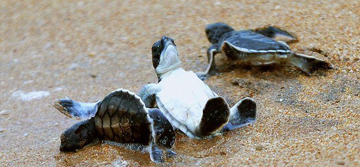 走!去澳洲看海龟洄游