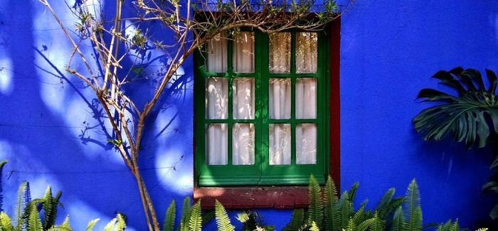 蓝房子中的弗里达