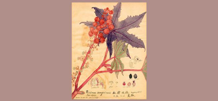 百年前的手绘植物科学画河北展出