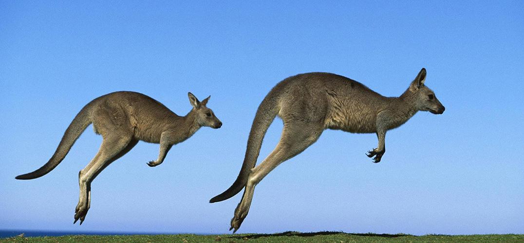 山火肆虐 澳大利亚岩壁上的千年岩画遗迹是否安好
