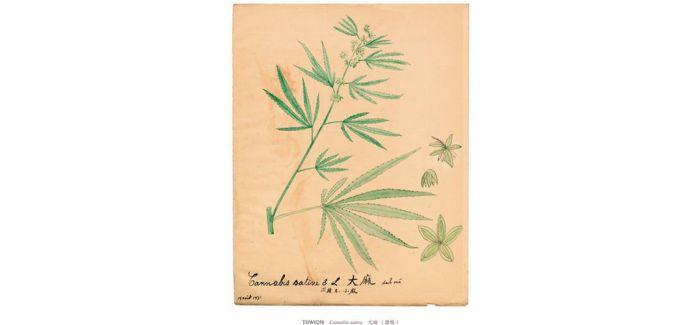 百年前的植物科学画是怎样的