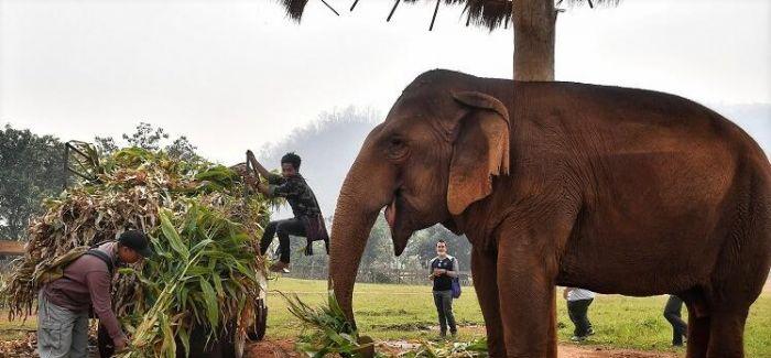 图片艺闻   泰国旅游业受重挫 大象失去工作...