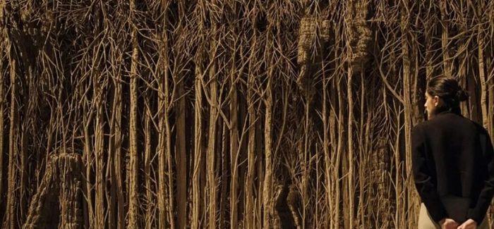 看树木是如何塑造人类文明
