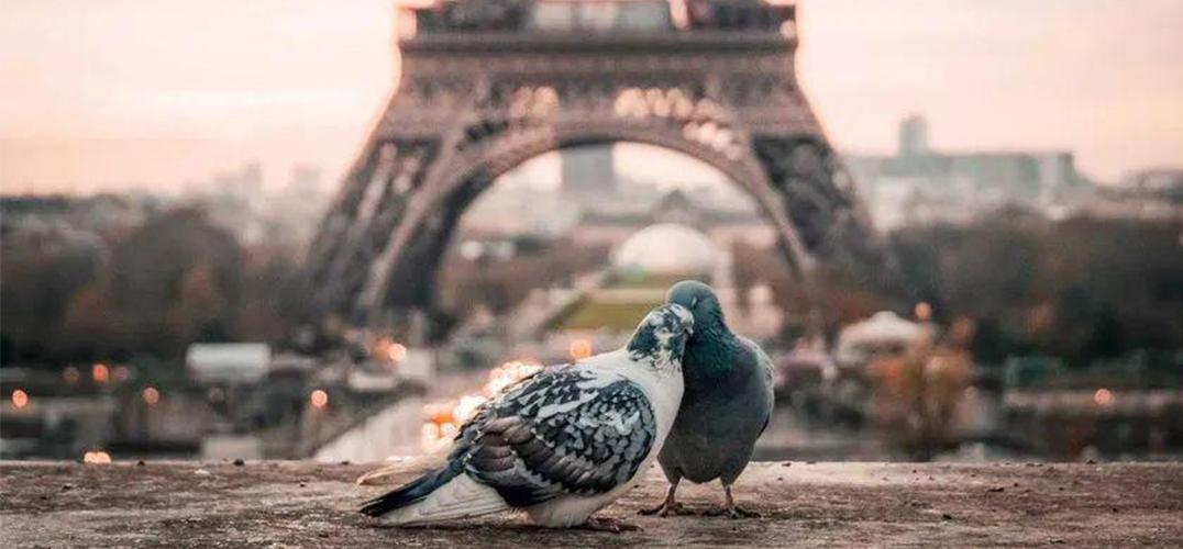 绕着世界 探求一份爱情的见证