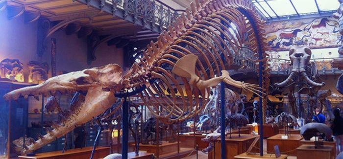 博物馆与城市:科学改变的历史和生活