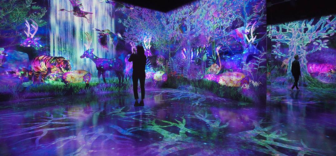 teamLab于福冈推出常设展 打造魔幻森林