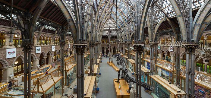 英国自然历史博物馆换帅