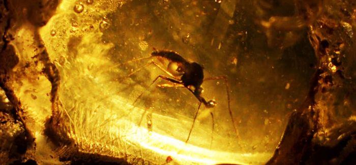 虫珀:记录生灵的最后时刻