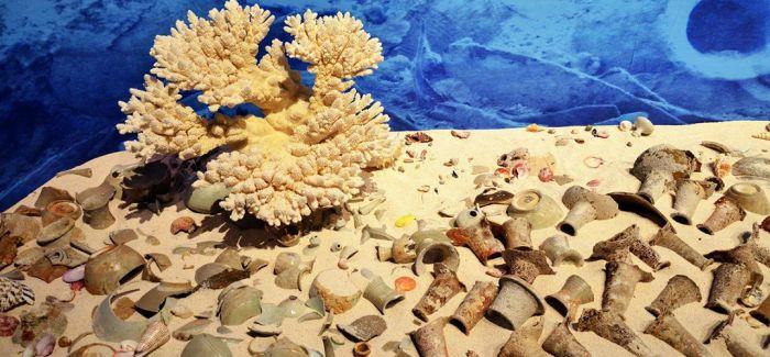 陆海丝绸之路的对话:南海出水文物敦煌首展