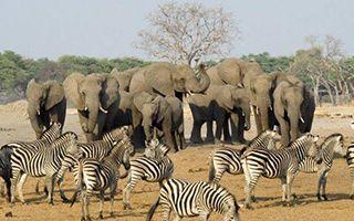 津巴布韦将于10月1日起对国际游客开放