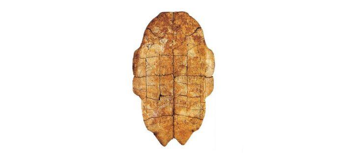 商代晚期甲骨等49件国家珍贵文物亮相广州