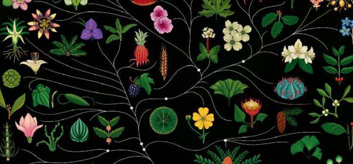 当解剖学遇见花花世界