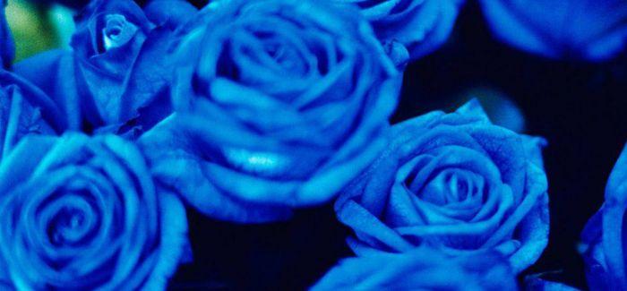 蜷川实花镜头中那抹纯蓝