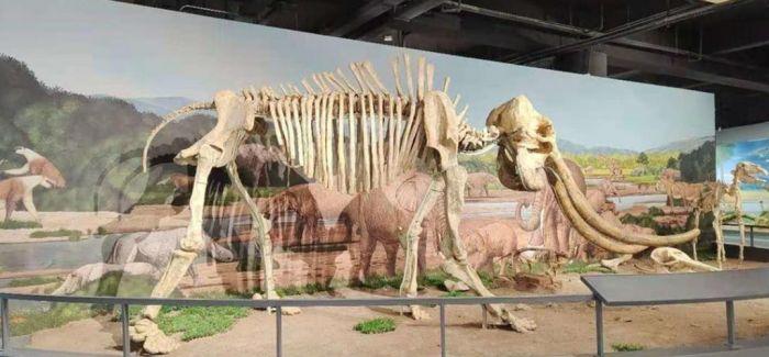 南京古生物博物馆将于2021年1月1日起正式对外开放