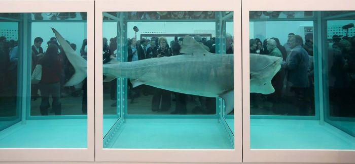 达明·赫斯特天价鲨鱼的那些事儿