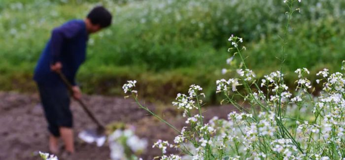 谷雨至 又到了别春迎夏的时节了